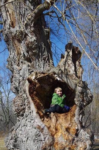 hollow tree resized